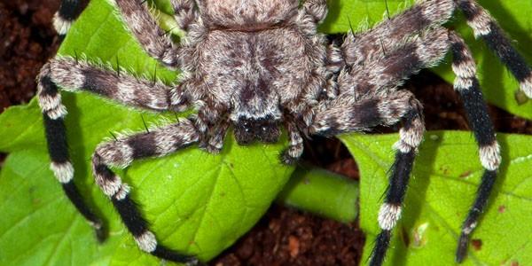 Inne pająki